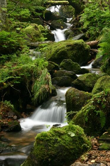 山彦の滝の下流の渓流