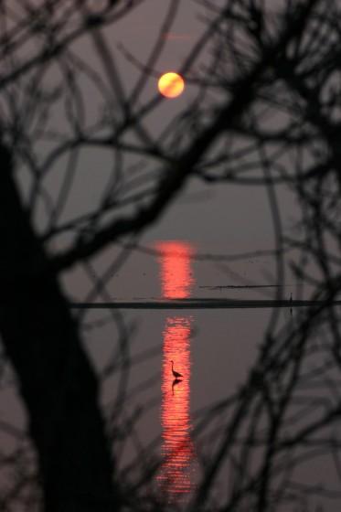 サロマ湖の夕陽とサギ