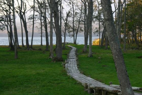 湖岸への木道