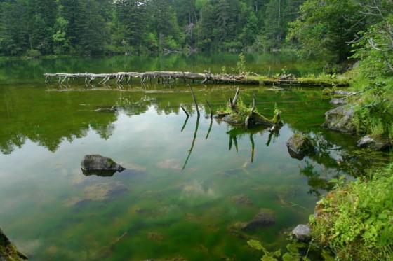 次郎湖1 倒れた木が殺伐とした雰囲気を出している