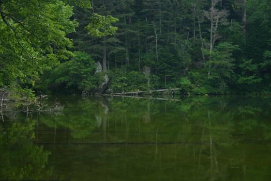 次郎湖2 原生林が深い