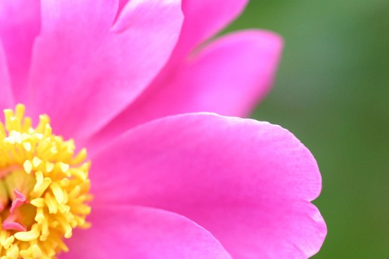 名称不明の花。上富良野町で撮影。2005年。