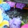 札幌&近郊神社 花手水めぐり「花詣」2021夏。今年もやるそうです!